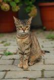 Katze im Freien Stockbilder
