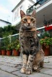 Katze im Freien stockfotos