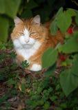 Katze im Freien 2 Lizenzfreie Stockfotos