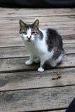 Katze im Freien auf hölzernem Hintergrund Lizenzfreies Stockbild