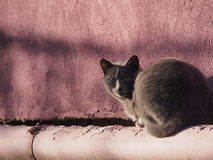 Katze im fronte der roten Wand Stockfoto