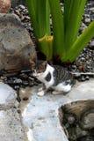 Katze im Garten 2 stockbilder