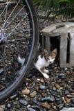 Katze im Garten 2 stockbild