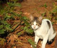 Katze im Garten Stockfoto