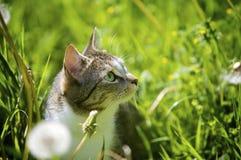 Katze im Garten Lizenzfreies Stockbild