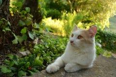 Katze im Garten Stockbild