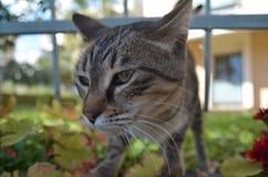 Katze im Garten durch die Fäule des Zerreibens Lizenzfreies Stockfoto