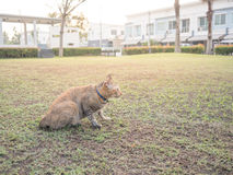 Katze im Garten im Dorf Stockfotografie