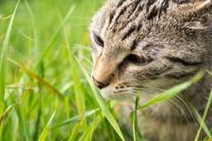 Katze im Garten slowakei stockfotos