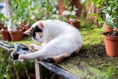 Katze im Gewächshaus lizenzfreie stockfotos
