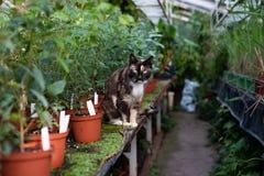 Katze im Gewächshaus stockfoto