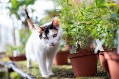 Katze im Gewächshaus stockfotografie