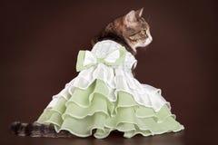 Katze im grünen frilling Kleid auf braunem Hintergrund Stockfotografie