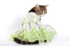 Katze im grünen frilling Kleid auf weißem Hintergrund Stockfotos
