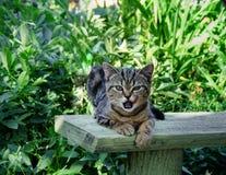 Katze im grünen Garten lizenzfreies stockfoto