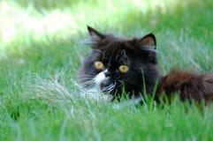 Katze im Gras lizenzfreie stockfotografie