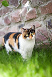 Katze im Gras stockfotografie