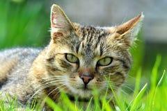 Katze im Gras lizenzfreie stockfotos