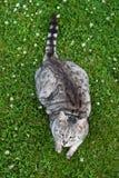 Katze im Gras Stockbilder
