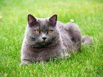 Katze im Gras Stockfoto