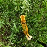 Katze im Gras Stockbild