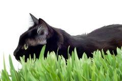 Katze im Gras Stockfotos