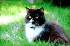 Katze im grünen Gras Lizenzfreies Stockfoto