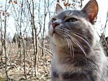Katze im Herbst Lizenzfreies Stockbild