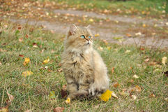 Katze im Herbstlaub Lizenzfreie Stockbilder