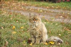 Katze im Herbstlaub Stockfoto