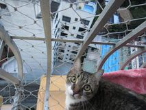 Katze im Himmel der Stadt lizenzfreies stockbild