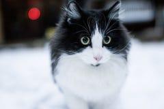 Katze im Hintergrund des verschneiten Winters Lizenzfreie Stockfotografie