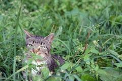 Katze im Hinterhalt Stockbild