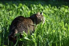 Katze im hohen Gras stockbild