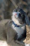 Katze im Holz Stockfoto