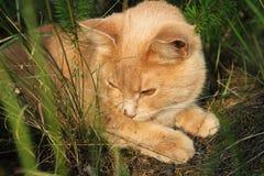 Katze im Holz Stockfotografie