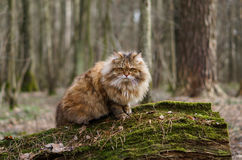 Katze im Holz lizenzfreie stockfotos