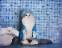 Katze im Hut für das Haar unter der Dusche Stockbilder