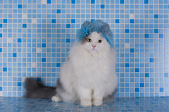 Katze im Hut für das Haar unter der Dusche Stockfotos