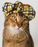 Katze im Hut im Studio Lizenzfreie Stockfotos