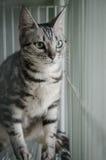 Katze im Käfig Lizenzfreie Stockbilder