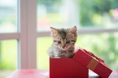 Katze im Kasten Lizenzfreie Stockfotos