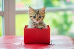Katze im Kasten Lizenzfreie Stockbilder