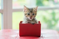 Katze im Kasten Stockbild