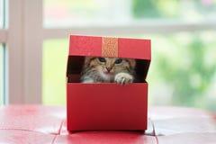 Katze im Kasten Stockfoto