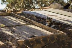 Katze im Kirchhof stockbilder