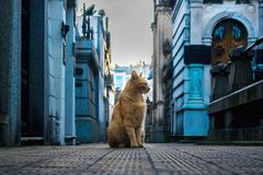 Katze im Kirchhof Lizenzfreie Stockfotografie