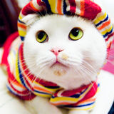 Katze im Kleid Stockfoto