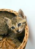 Katze im Korb Lizenzfreies Stockfoto