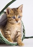 Katze im Korb Lizenzfreies Stockbild